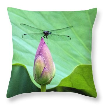 Dragonfly Landing On Lotus Throw Pillow