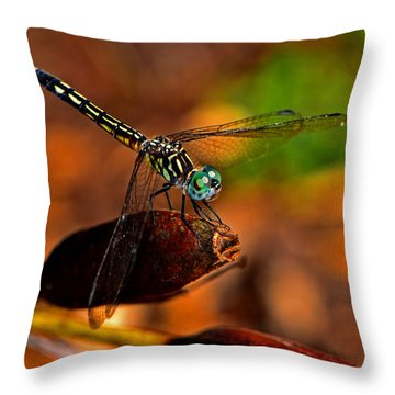 Throw Pillow featuring the photograph Dragonfly On A Flower Pod 002 by George Bostian