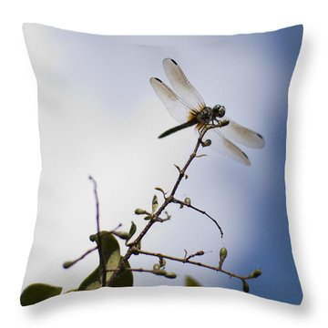 Dragonfly On A Limb Throw Pillow by Dustin K Ryan