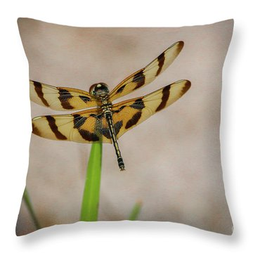 Dragonfly On Grass Throw Pillow