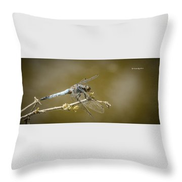 Throw Pillow featuring the photograph Dragonfly On The Spot by Stwayne Keubrick