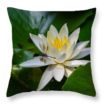 Dragonfly On Waterlily  Throw Pillow