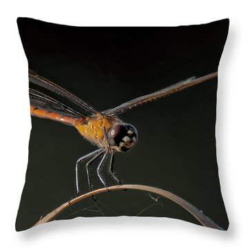 Dragonfly On Weed Throw Pillow by Don Durfee
