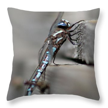 Throw Pillow featuring the photograph Dragonfly Pause by Cathie Douglas
