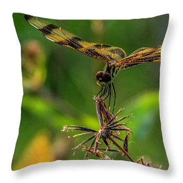 Dragonfly Resting On Flower Throw Pillow