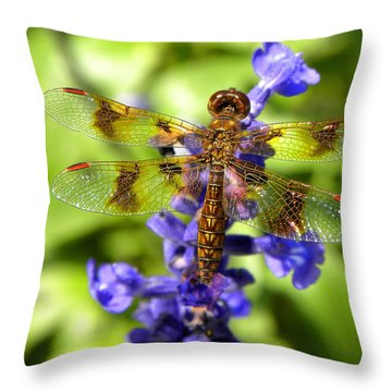 Throw Pillow featuring the photograph Dragonfly by Sandi OReilly