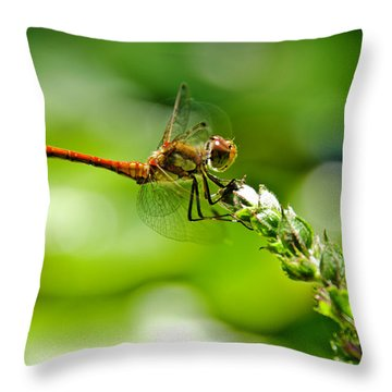 Dragonfly Sitting On Flower Throw Pillow