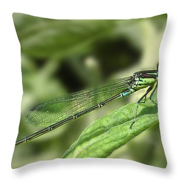 Dragonfly1 Throw Pillow by Svetlana Sewell