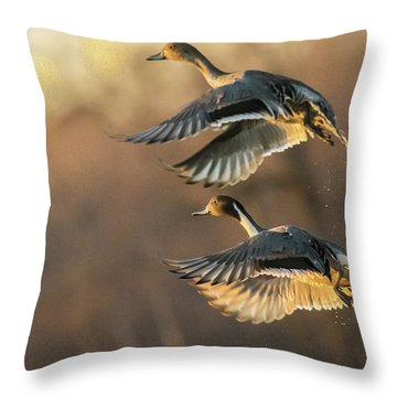 Throw Pillow featuring the photograph Drake And Hen Pintail  by Kelly Marquardt