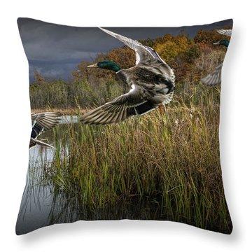 Drake Mallard Ducks Coming In For A Landing Throw Pillow