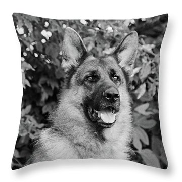 Throw Pillow featuring the photograph Drake Watching by Sandy Keeton