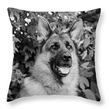 Drake Watching Throw Pillow by Sandy Keeton