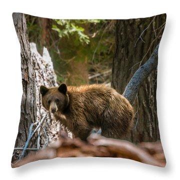 Drakesbad Wakeup Throw Pillow by Jan Davies