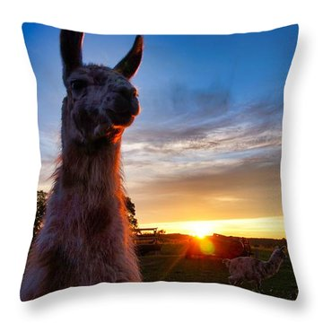 Drama Llamas Throw Pillow