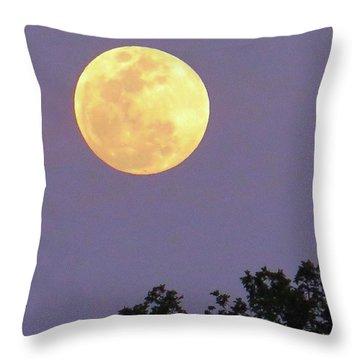 Dream Big Throw Pillow by Austin Tuxedo Cat