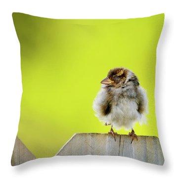 Dream Sparrow Throw Pillow by Betty LaRue