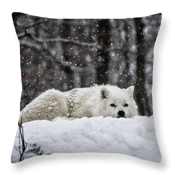 Throw Pillow featuring the photograph Dreams Of Warmer Weather by Heather King