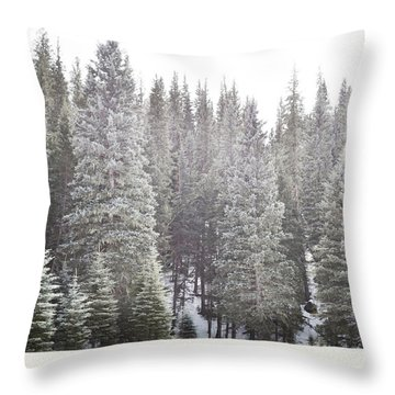 Throw Pillow featuring the photograph Dreamy Pine Snow Forest Landscape by Andrea Hazel Ihlefeld