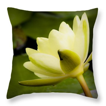 Dreamy Water Lilly Throw Pillow