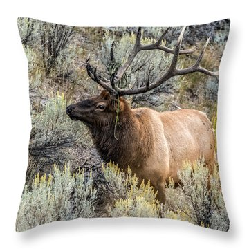 Throw Pillow featuring the photograph Dressed For Rut by Yeates Photography