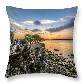 Throw Pillow featuring the photograph Driftwood At The Edge by Debra and Dave Vanderlaan
