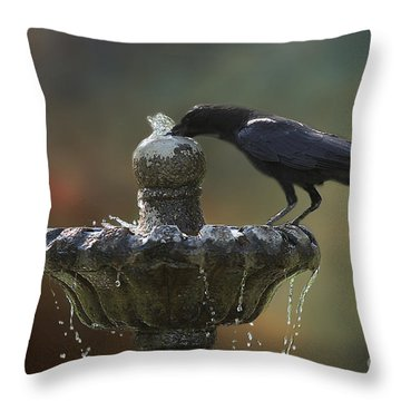 Drinking Crow Throw Pillow