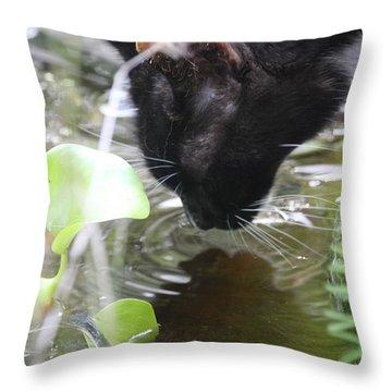 Drinking Kitty Throw Pillow