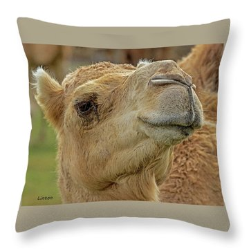 Dromedary Or Arabian Camel Throw Pillow