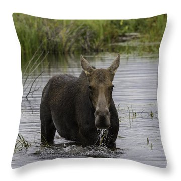 Drooling Cow Moose Throw Pillow