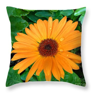 Droplets On A Daisy Throw Pillow