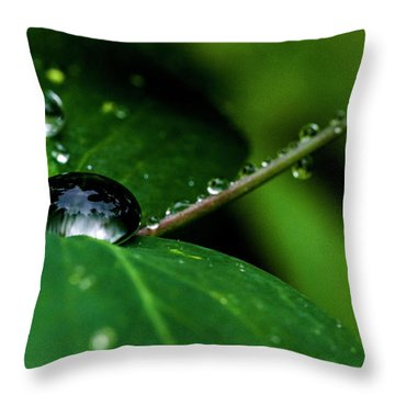Throw Pillow featuring the photograph Droplets On Stem And Leaves by Darcy Michaelchuk