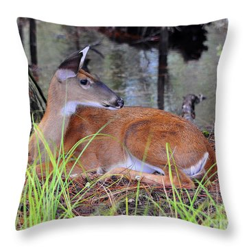 Throw Pillow featuring the photograph Drowsy Deer by Al Powell Photography USA