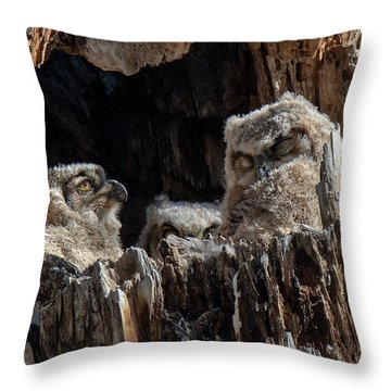 Throw Pillow featuring the photograph Drowsy Heidi And Sleepy Owlets by Stephen  Johnson