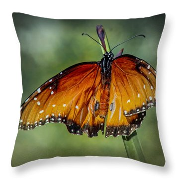 Throw Pillow featuring the photograph Drying Wings by Elaine Malott