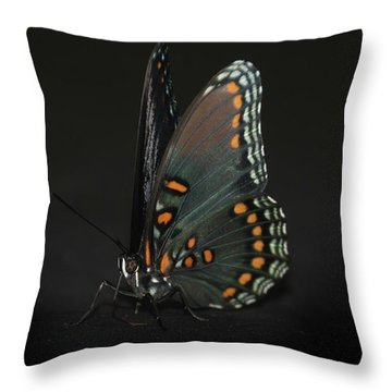 Drying Wings Throw Pillow by Judy Hall-Folde