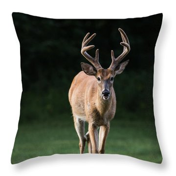 Throw Pillow featuring the photograph Dsc_0076 by Andrea Silies
