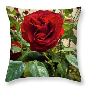 Dublin Bay Climbing Rose Throw Pillow by Maria Janicki