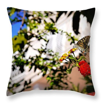 Dubrovniks Butterfly Throw Pillow