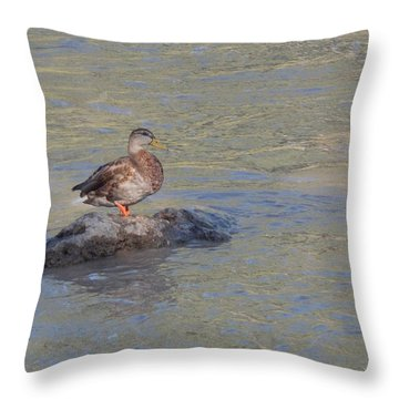 Duck Alone On The Rock Throw Pillow