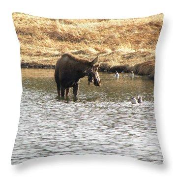 Ducks - Moose Rollinsville Co Throw Pillow