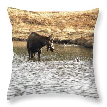 Ducks - Moose Rollinsville Co Throw Pillow