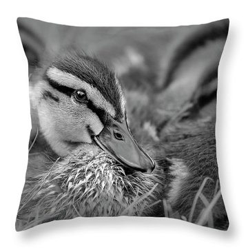 Throw Pillow featuring the photograph Ducklings Cuddling Bw by Susan Candelario