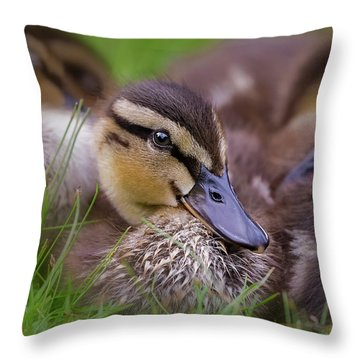 Throw Pillow featuring the photograph Ducklings Cuddling by Susan Candelario