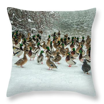 Ducks Pond In Winter Throw Pillow
