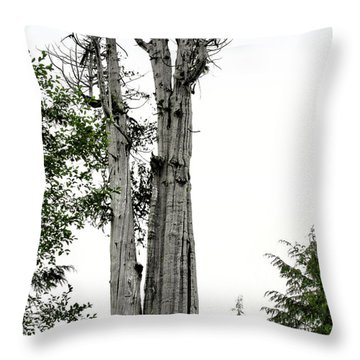 Duncan Memorial Big Cedar Tree - Olympic National Park Wa Throw Pillow by Christine Till