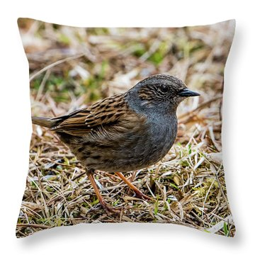 Dunnock Throw Pillow by Torbjorn Swenelius