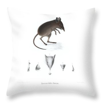 Throw Pillow featuring the drawing Dusky Elephant Shrew, Elephantulus Fuscus by J D L Franz Wagner