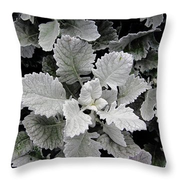 Dusty Miller Throw Pillow