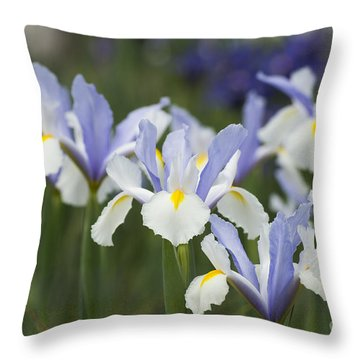 Dutch Iris Silver Beauty Throw Pillow
