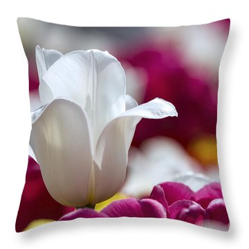 Dutchman's Beauty 1 Throw Pillow